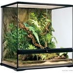 Et terrarie kan fås billigt online